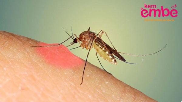Muỗi đốt ít gây ra các dị ứng nghiêm trọng