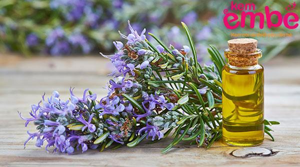 Tinh dầu hương thảo giúp giảm đau ngứa hiệu quả