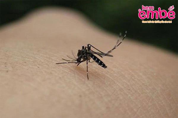 Muỗi cắn gây sốt