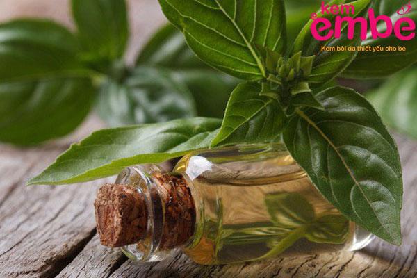 Tinh dầu húng quế làm giảm đau ngứa rất nhanh chóng