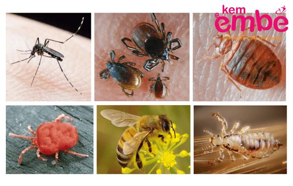 một số loại côn trùng hay cắn em bé