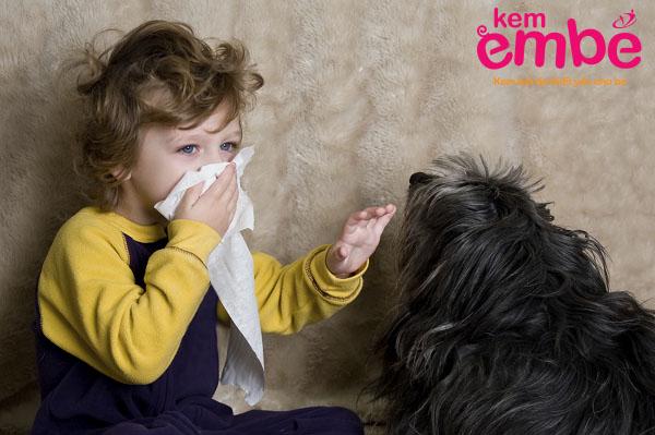 tiếp xúc với thú cưng là nguyên nhân gây chàm sữa